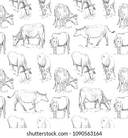 Seamless pattern with cow. Vector illustration in vintage engraved style on white background.