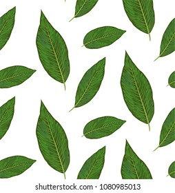 Seamless pattern with diffenbachia plants, green leaves cute wallpaper. Vector elegant print isolated on white background. Delicate art template