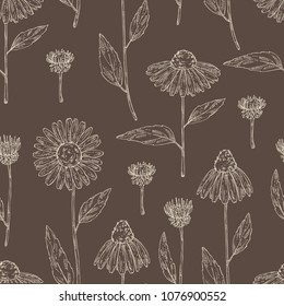 Seamless pattern with echinacea: plant, leaves and echinacea flowers. Cosmetics and medical plant. Vector hand drawn illustration.