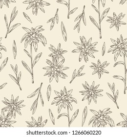 Seamless pattern with edelweiss: edelweiss flowers and leaves. Leontopodium. Cosmetic and medical plant. Vector hand drawn illustration