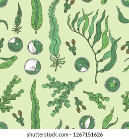 Seamless pattern with edible seaweed: laminaria seaweed, macrocystis, chlorella seaweed and fucus. Brown algae. Vector hand drawn illustration