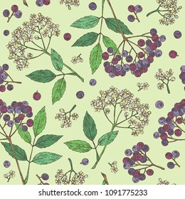 Seamless pattern with elderberry black: branch of elderberry , berries, flowers and leaves. Vector hand drawn illustration.