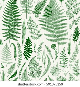Seamless pattern. Ferns. Vintage vector botanical illustration. Green