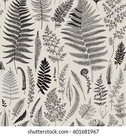 Seamless pattern. Ferns. Vintage vector botanical illustration. Black and white