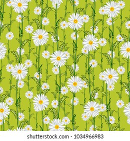 Seamless pattern from field chamomiles in the style of Provence. Summer