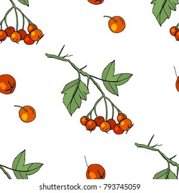 Seamless pattern with floral elements on white. Endless texture with hawthorn berries