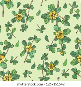 Seamless pattern with garden purslane: purslane flowering branch and leaves. Portulaca. Cosmetic and medical plant. Vector hand drawn illustration