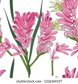 seamless pattern of hand drawn Australia native pink kangaroo paw flower illustration on white background