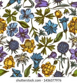 Seamless pattern with hand drawn colored bellflower, edelweiss, globethistle, globeflower, meadow geranium, gentiana