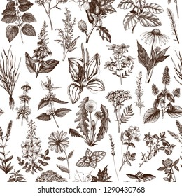 Seamless pattern with hand drawn herbs and spices.  Vector background with Botanical drawings. Vintage Medicinal Plants illustration. Engraved style.
