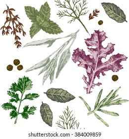seamless pattern with hand drawn herbs and spices