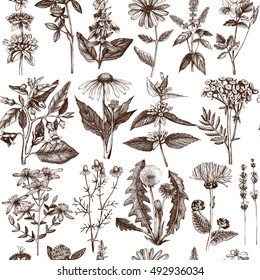 Seamless pattern with hand drawn herbs and spice collection.  Vector background with Botanical sketch. Vintage Medicinal and Poisonous Plants illustration.