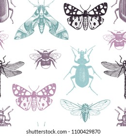 Seamless pattern with hand drawn insects illustrations. Vintage butterflies, beetles, cicada, bumblebee and dragonfly sketch. Vector background with entomological drawings.