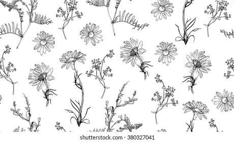 Seamless pattern with hand drawn plants. Vector. Herbal background.  Botanical illustration.  Seamless background with chamomile