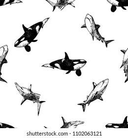 Seamless pattern of hand drawn sketch style killer whales and sharks isolated on white background. Vector illustration.