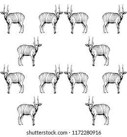 Seamless pattern of hand drawn sketch style bongo antelopes isolated on white background. Vector illustration.