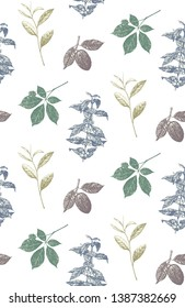 Seamless Pattern. Hand-drawn set of plants: cocao, tea, coffe and ginseng. Vector