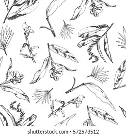 Seamless pattern with herbs and spices. Herbal black and white design with cardamom ginger, alpinia, curcuma plants