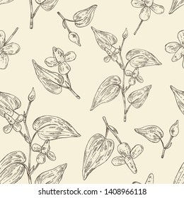 Seamless pattern with houttuynia: houttuynia flowers and leaves. Houttuynia cordata, Cosmetic and medical plant. Vector hand drawn illustration