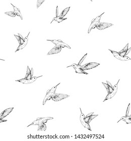 Seamless pattern with hummingbirds. Hand drawn vector illustration