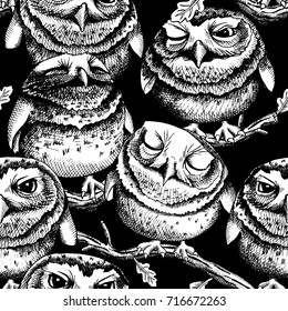 Seamless pattern with image of the little Owls on a branch. Vector black and white illustration.