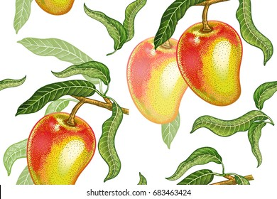 Seamless pattern with mango. Realistic vector illustration plant. Hand drawing with colored pencils. Fruit, leaf, branch of tree on white background. For kitchen design, food packaging. Vintage.