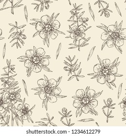 Seamless pattern with manuka: leaves and flowers of manuka . Cosmetic and medical plant. Vector hand drawn illustration.