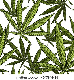 Seamless pattern with marijuana leaf. Hand drawn design leave cannabis. Vintage color vector engraving illustration for label, poster, web. Isolated on white background