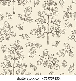 Seamless pattern with moringa: plant and leaves. Super food. Vector hand drawn illustration.
