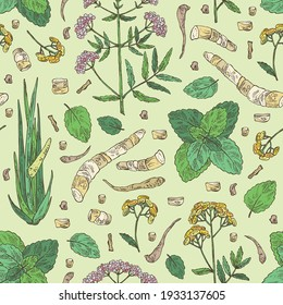 Seamless pattern with perfumery, cosmetics and medical plant: tansy flowers, plant and root of acorus calamus,  melissa plant and valeriana flower and root. Vector hand drawn illustration
