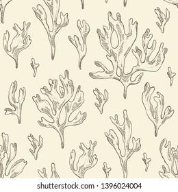 Seamless pattern with rhodymenia palmata : rhodymenia palmata seaweed. Red edible seaweed. Vector hand drawn illustration