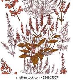 Seamless pattern of sage plant