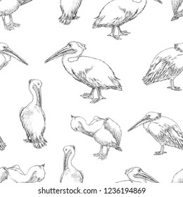 Seamless pattern of sketches of pelicans