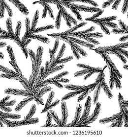 Seamless pattern of spruce branches
