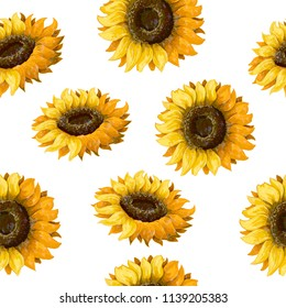 Seamless pattern with sunflowers on a white background.