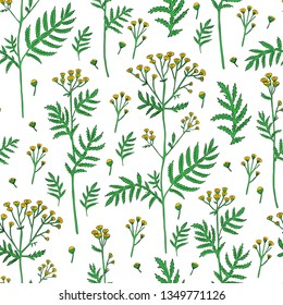 Seamless pattern Tansy flower or Tanacetum vulgare vector illustration isolated on white backdrop, ink sketch, decorative herbal doodle, for design medicine, wedding invite, greeting card, cosmetic