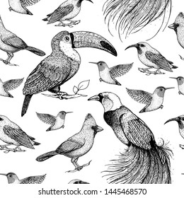 Seamless pattern with toucan, hummingbird, bird of paradise, red cardinal bird, purple honeycreeper. Animals illustration. Tropical birds. Hand drawn vector illustration.