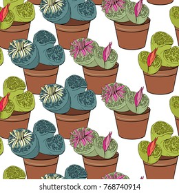 Seamless pattern with traditional homeplant lithops. Endless texture with flower used indoor.