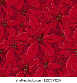 Seamless pattern with traditional homeplant poinsettia. Endless texture with flower used indoor. Vector color illustration.