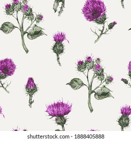 Seamless pattern with vector watercolor thistle. Vintage botanical wallpaper.