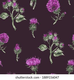 Seamless pattern with vector watercolor thistle. Vintage botanical wallpaper on black background.
