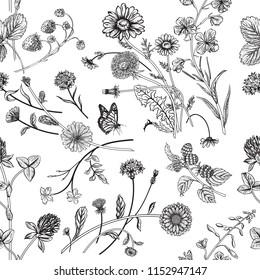 Seamless pattern with wild herbs. Vector illustration.