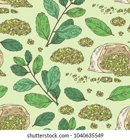 Seamless pattern with yerba mate: mate branch and leaves. Vector hand drawn illustration.