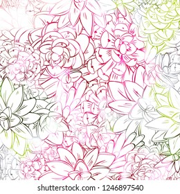 Seamless sucullent pattern. Color line art beautiful background