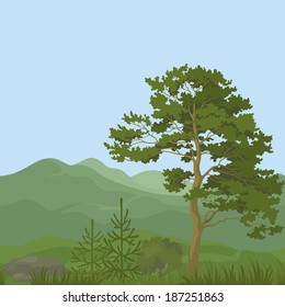 Seamless, summer mountain landscape with pine trees, firs, green grass and blue sky. Vector