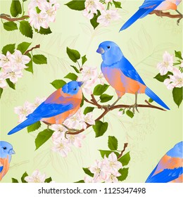 Seamless texture Bluebirds  thrush small songbirdons on an apple tree branch with flowers vintage vector illustration editable hand draw