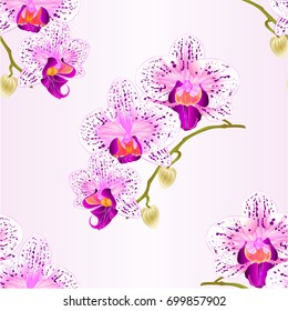 Seamless texture  Orchid Phalaenopsis purple and white stem with flowers and  buds closeup  vintage  vector editable illustration hand draw