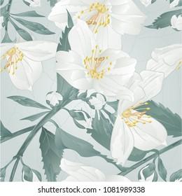 Seamless texture twig  flower jasmine and buds crack vintage vector illustration  editable hand draw