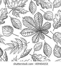 Seamless vector pattern with autumn leaves. Hand drawn detailed botanical background. Oak, maple, chestnut leaf drawing. Vintage fall seasonal decor.