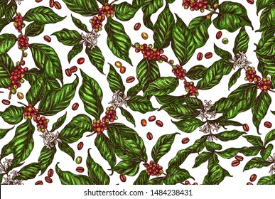 Seamless vector pattern with coffee tree and plants. Coffee growing color background in hand drawn engraving style. Sketch of grains, berries, foliage and flowers